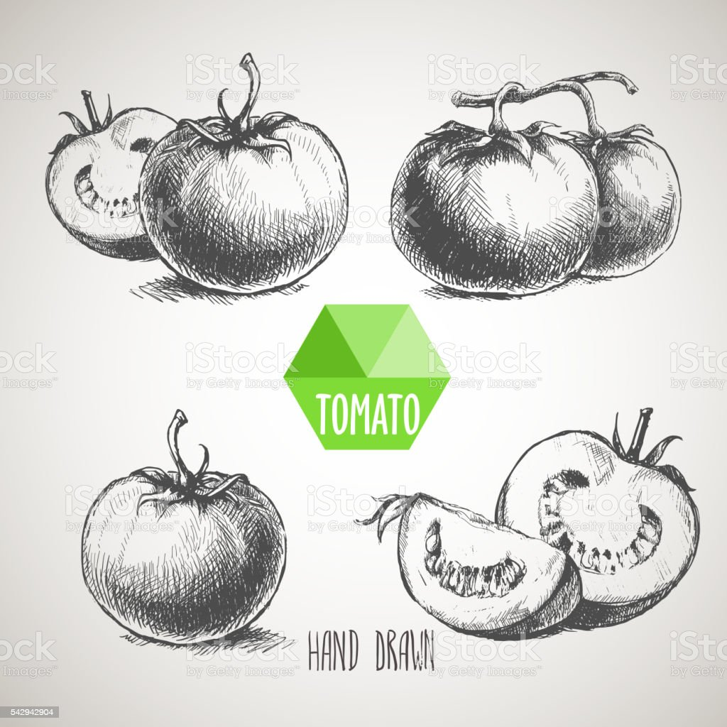 Set of hand drawn tomato vector art illustration