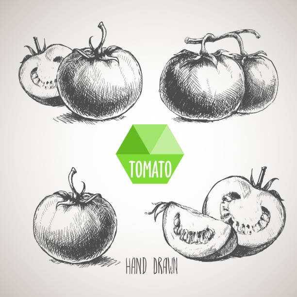 ilustrações de stock, clip art, desenhos animados e ícones de set of hand drawn tomato - tomate