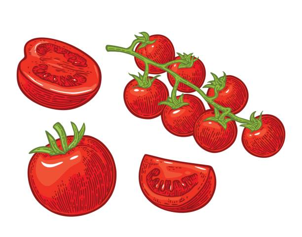 set of hand drawn tomatoes. branch, whole and slice. - cherry tomato stock illustrations