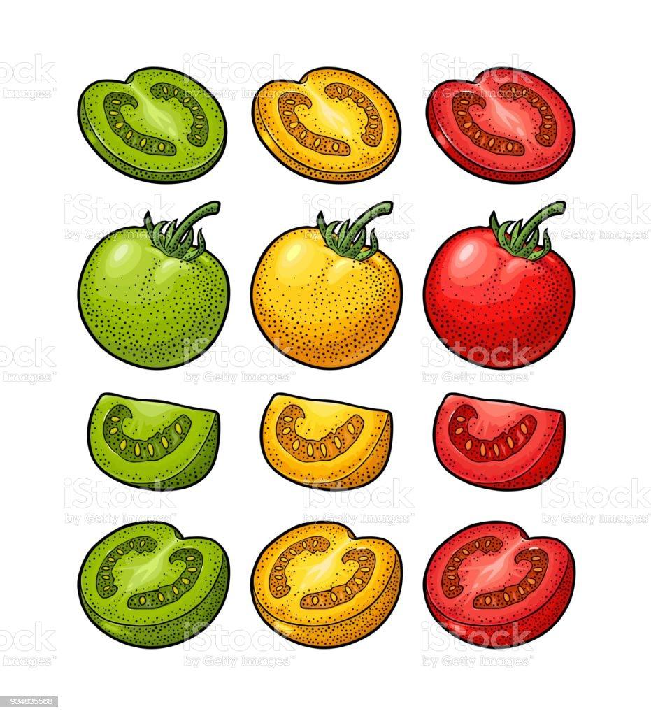 손으로 그린 토마토의 집합입니다. 분기, 전체 및 조각입니다. - 로열티 프리 검정 벡터 아트