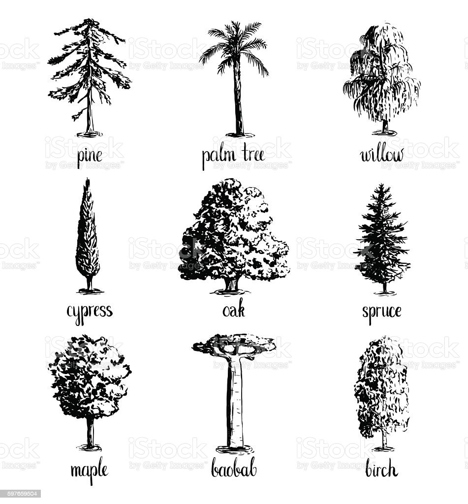 Set of hand drawn tree sketches. - ilustración de arte vectorial