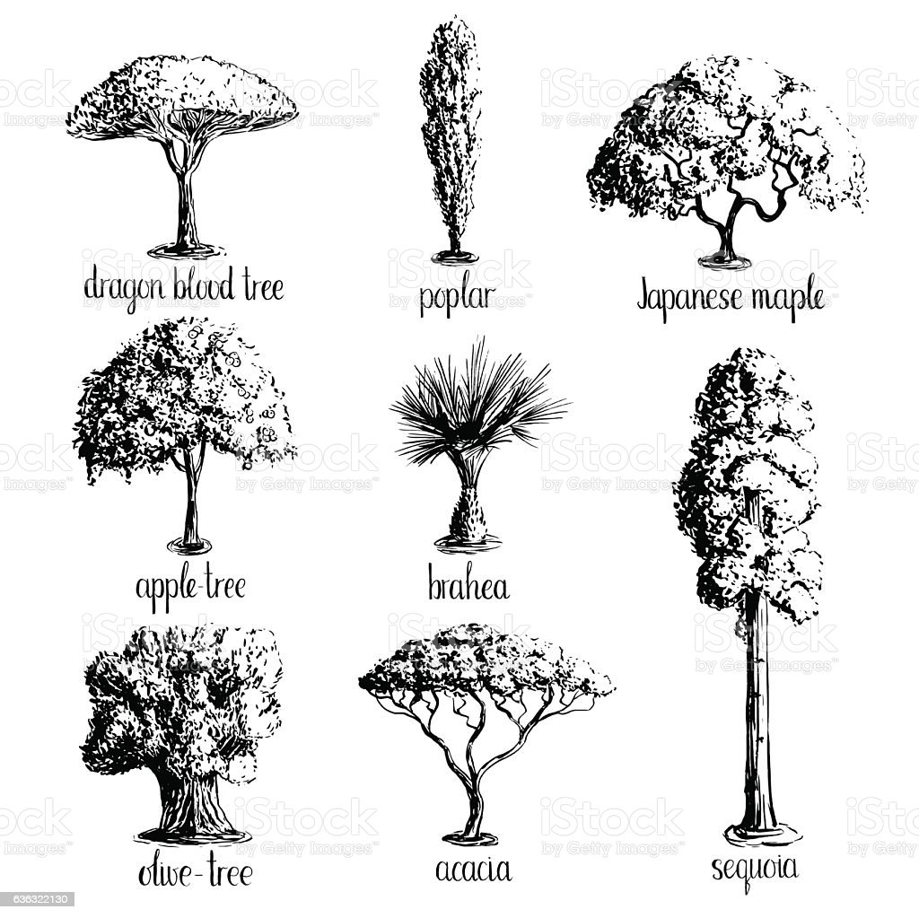 Set of hand drawn tree sketches. vector art illustration