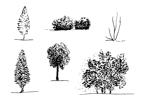 Set of hand drawn trees sketch style, black isolated plants on white background. Vector illustration monochrome.