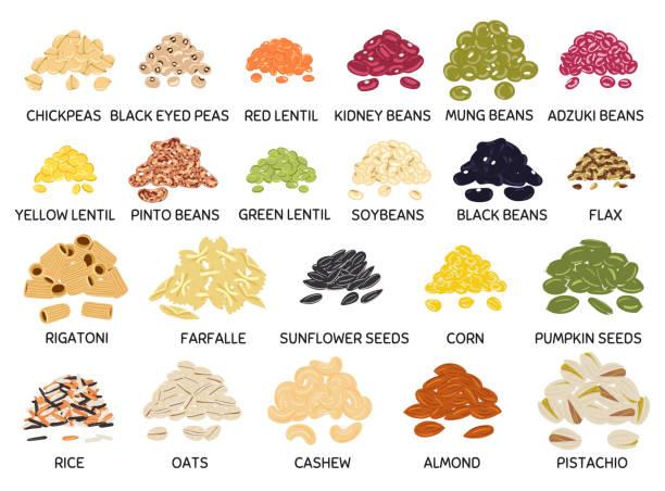zestaw ręcznie rysowanej wektorowej garści fasoli, roślin strączkowych, nasion i orzechów - fasola stock illustrations