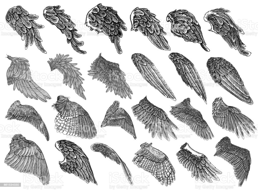 Set of hand drawn vintage etched woodcut angel or bird detailed wings. Heraldic wings for tattoo and mascot design. Isolated sketch collection vector. Card, poster, t-shirt, smart phone, CD print. vector art illustration