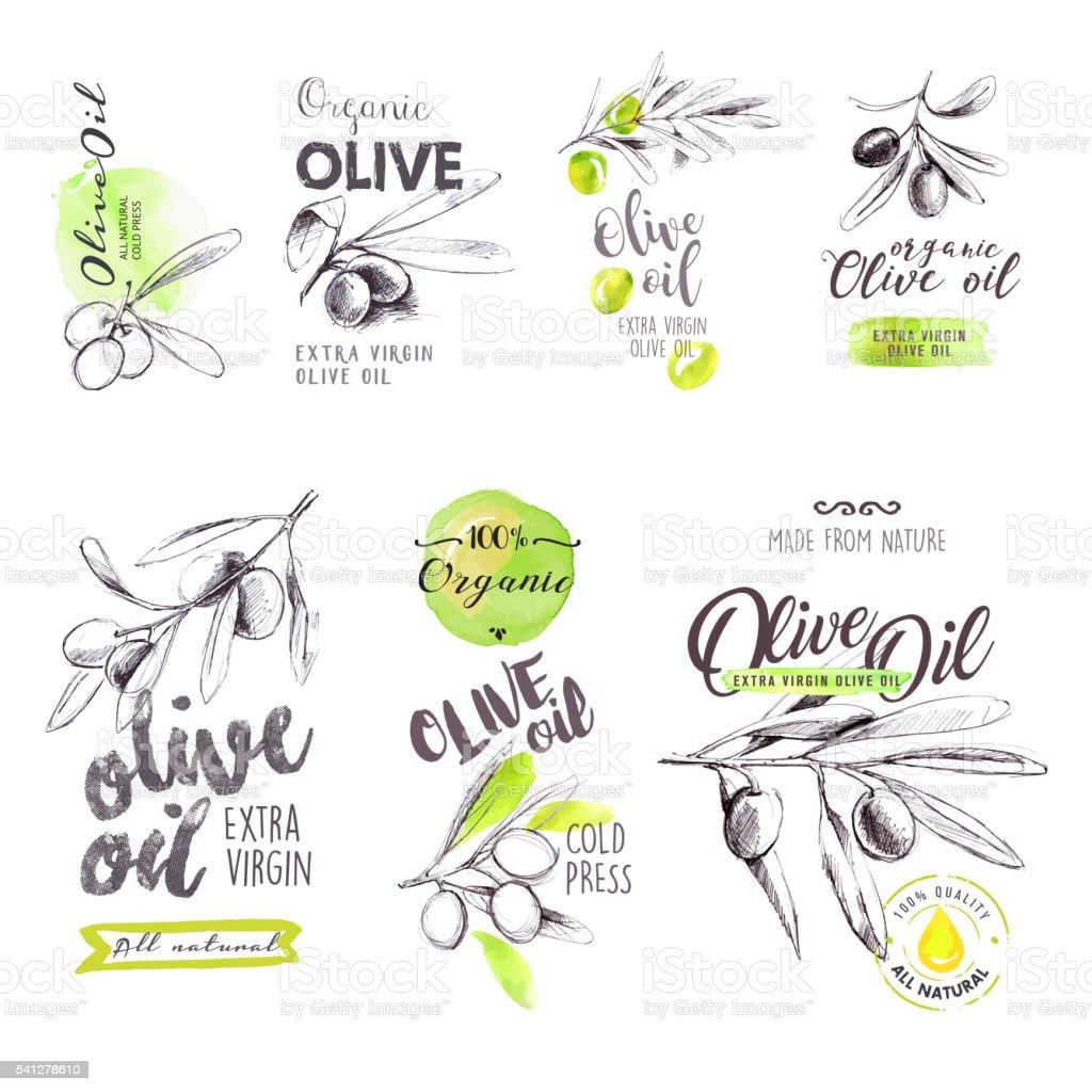 Conjunto de desenhado à mão em Aquarela azeite rótulos e sinais de - ilustração de arte vetorial