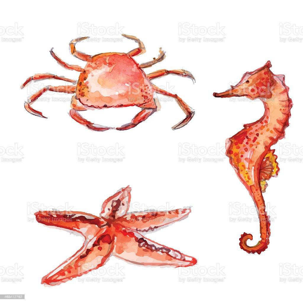 Set of hand drawn watercolor sea creatures. orange crab, horse vector art illustration