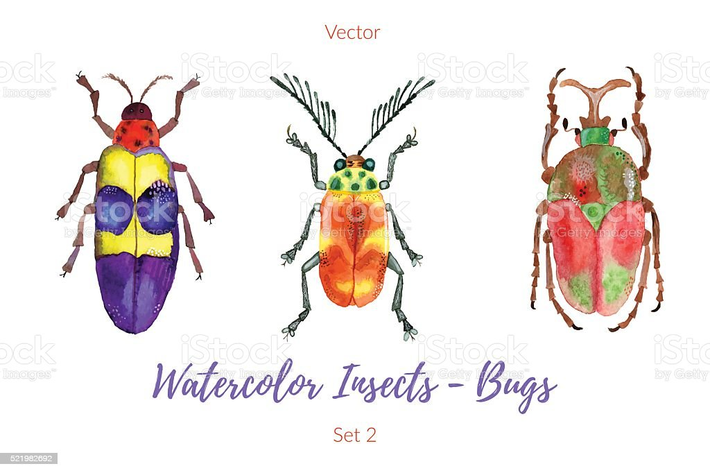Set of hand painted watercolor bugs, vector. vector art illustration