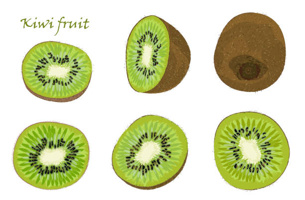 bildbanksillustrationer, clip art samt tecknat material och ikoner med uppsättning av handritade kiwifrukt, singel, skalade och skivade frukter. realistisk teckning, isolerade på vit bakgrund - kivik
