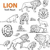 Set of Hand-Drawn Lions