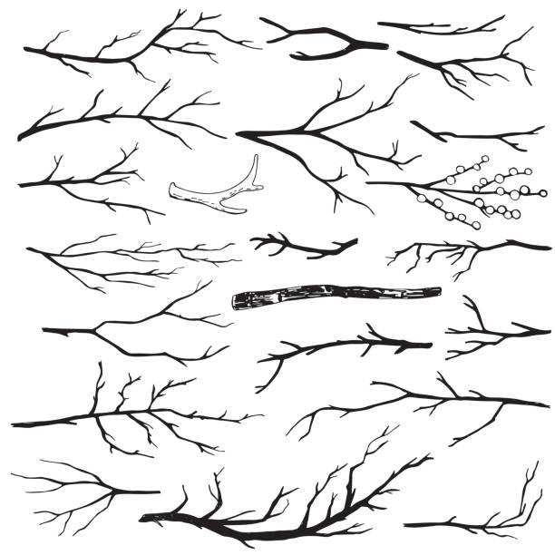 zestaw ręcznie rysowanych gałęzi drewnianych - gałązka stock illustrations