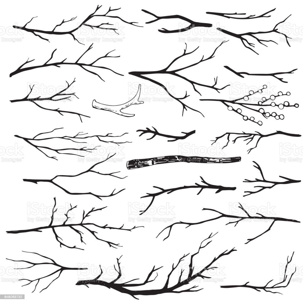 Set of hand-drawn wood branches vector art illustration