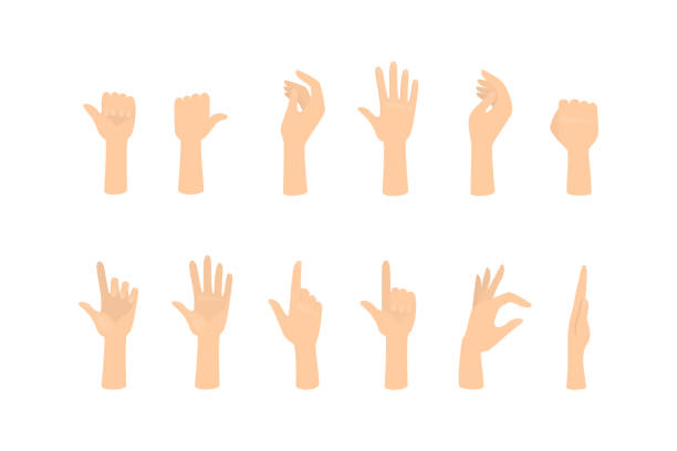 bildbanksillustrationer, clip art samt tecknat material och ikoner med uppsättning händer som visar olika gester - människoarm