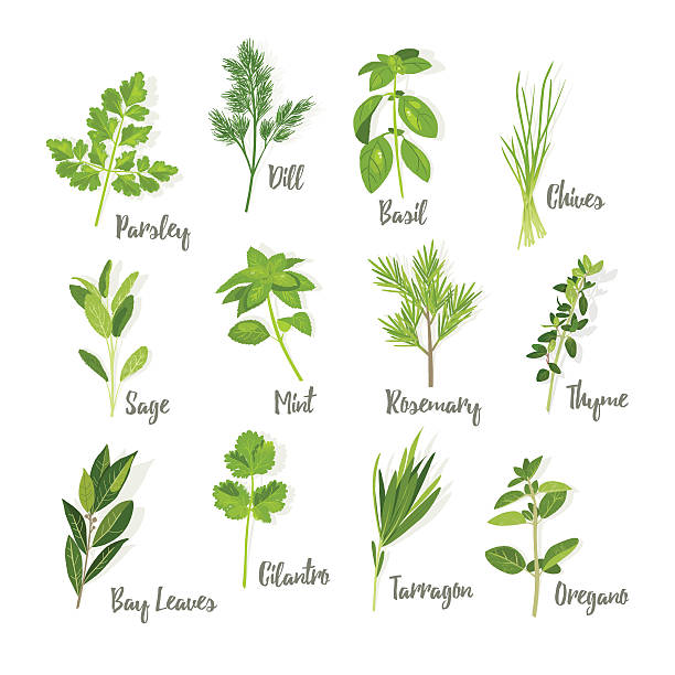 Set of herbs isolated Set of herbs isolated, vector illustration basil stock illustrations