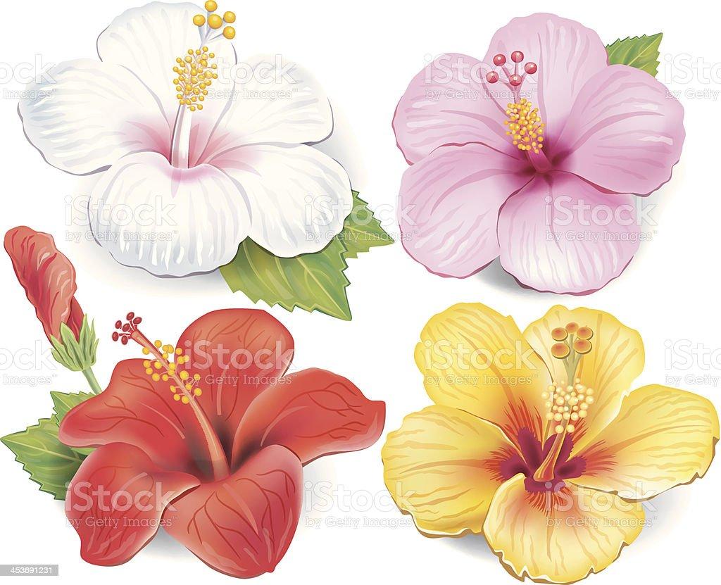 Set of Hibiscus vector art illustration