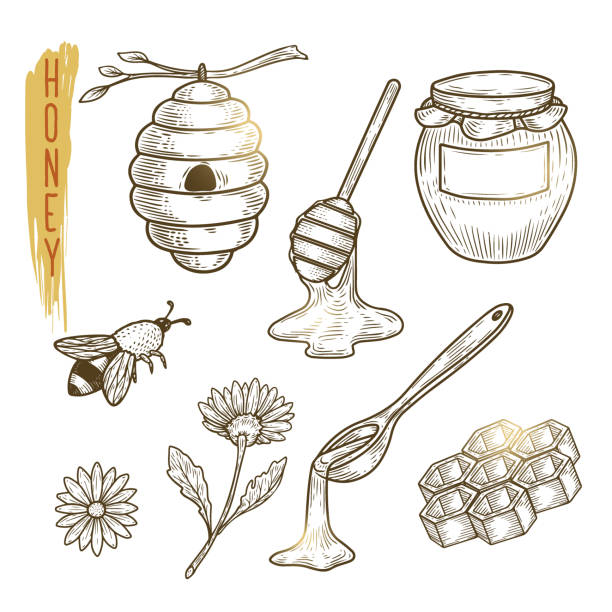 Set of honey elements. Vector sketch of sweet organic product isolated on background. Set of honey elements include hive, pot, honeycomb, bee, flower and spoon. Vector sketch of sweet organic product. Outline icons are use as label, logo, emblem for advertising organic products. bee clipart stock illustrations