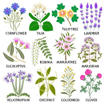 Set of Honey Plants.