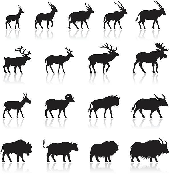 stockillustraties, clipart, cartoons en iconen met set of horned animal silhouettes - antilope