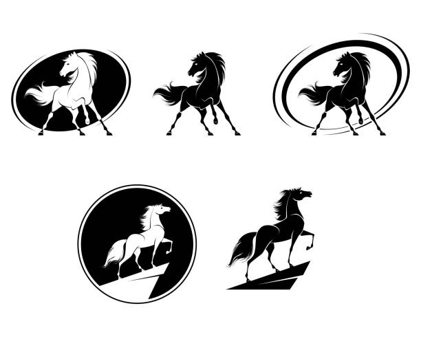 Set of horse icons Vector illustration of set of horse icons stallion stock illustrations