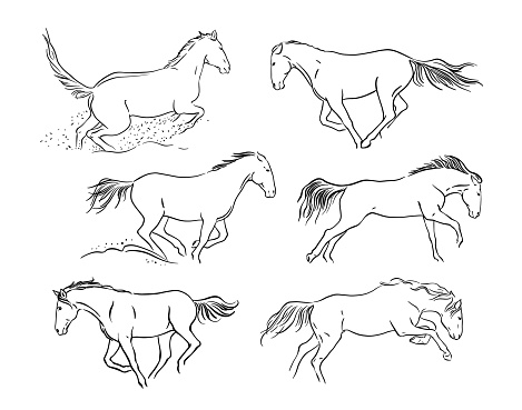 Set of horses. Sketch. Black and white vector drawing. Vector illustration on white background.