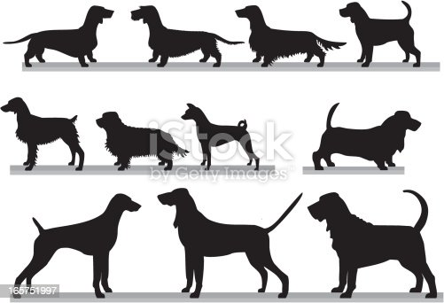 Eleven purebred of the ACC and CCC hound group.