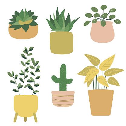 Set of house indoor plants in pots. Cactus, pilea, ficus, succulent, calathea, aloe vera.