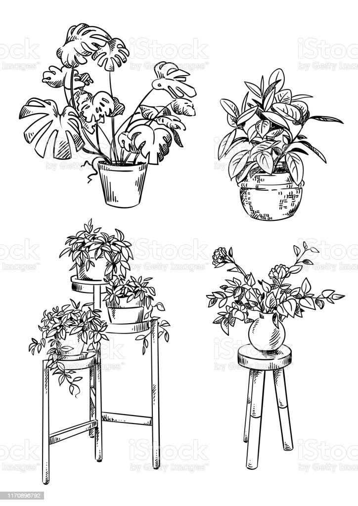 Set Of House Plants In Pots Vector Drawings Stock Illustration Download Image Now Istock