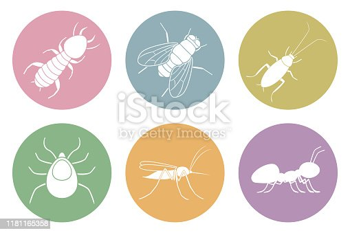 Set of household pest icons. Cockroach, termite, mosquito, fly, ant and tick. Vector.