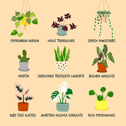 Set of houseplant illustrations