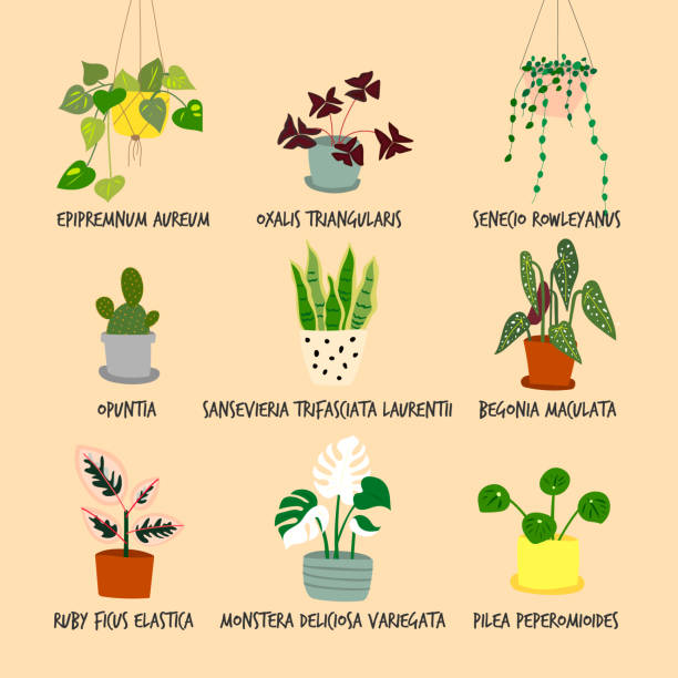 Set of houseplant illustrations vector art illustration