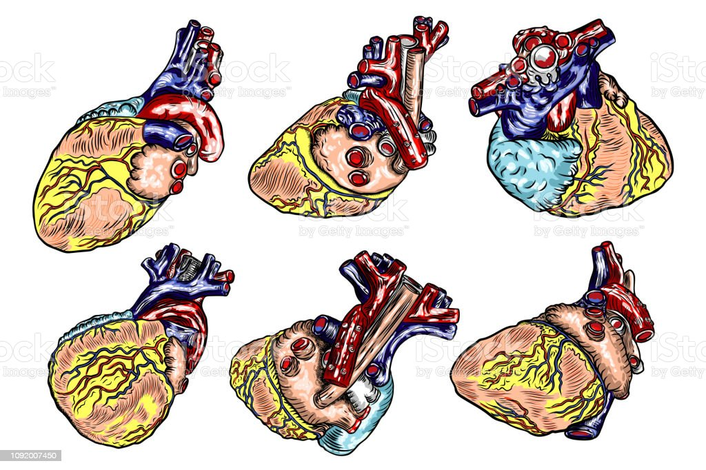 Set Of Human Anatomy Heart Black And Color Engraving Isolated On Background Cartoonish Flash Tattoo Design Vector Stock Illustration Download Image Now Istock