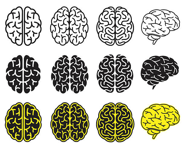 Set of human brains. Vector illustration. vector art illustration
