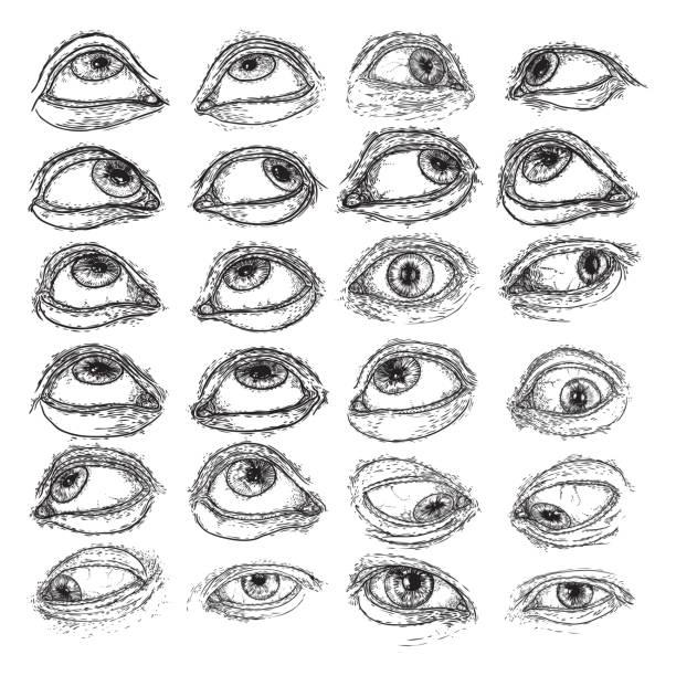 ilustraciones, imágenes clip art, dibujos animados e iconos de stock de conjunto de ojos humanos para el diseño de todas las variaciones de símbolos oculares que ven. colección de arte de tinta de tatuajes de alquimia, espiritualidad de religión y ocultismo. visión de la providencia y tercer ojo. obra de arte de dibujo a  - emoji celoso