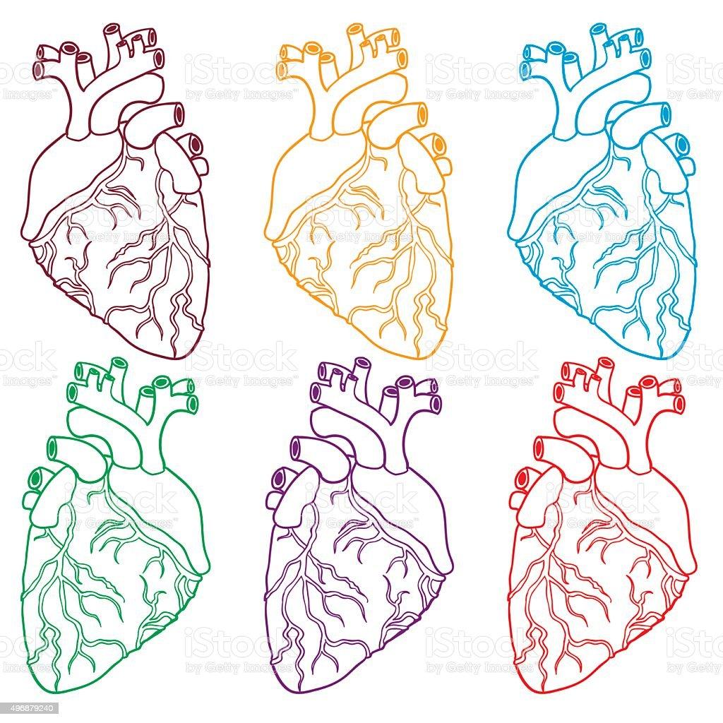 Set of Human hearts. Vector illustration. vector art illustration