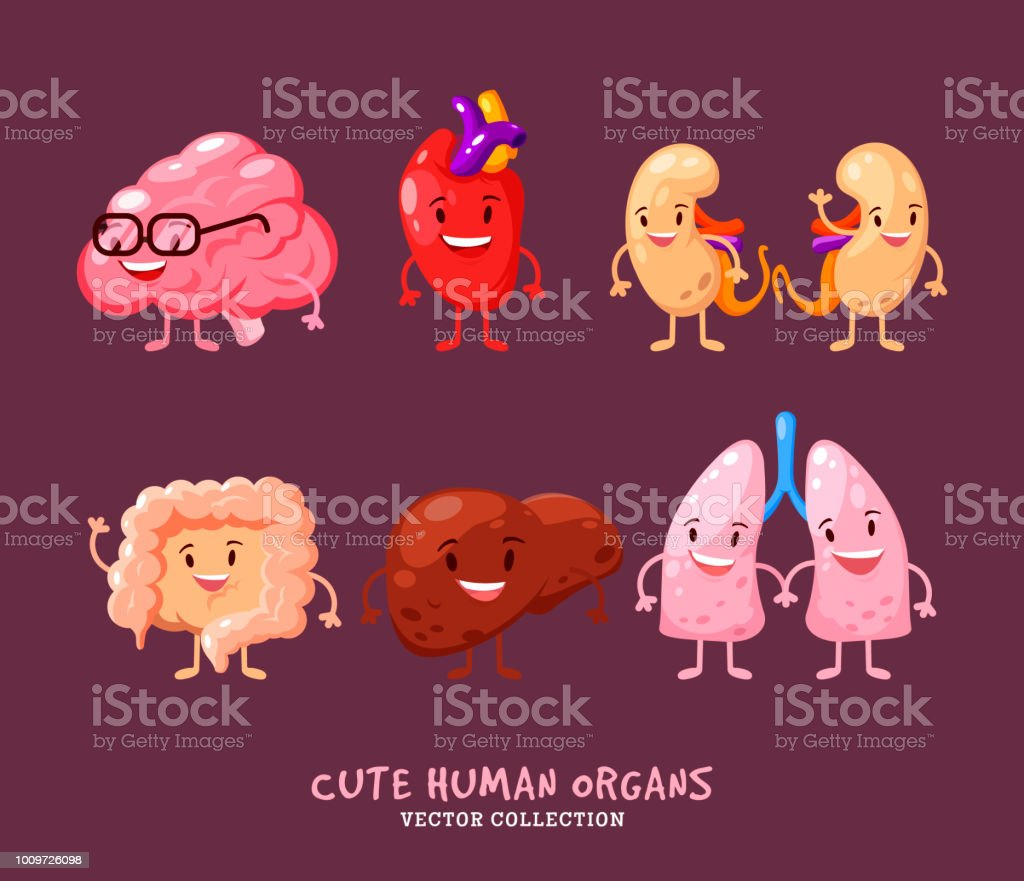 Set Of Human Internal Organs Illustrations Funny Human Body Organs