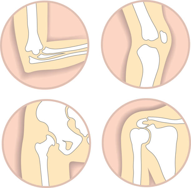 Royalty Free Shoulder Joint Clip Art, Vector Images & Illustrations ...