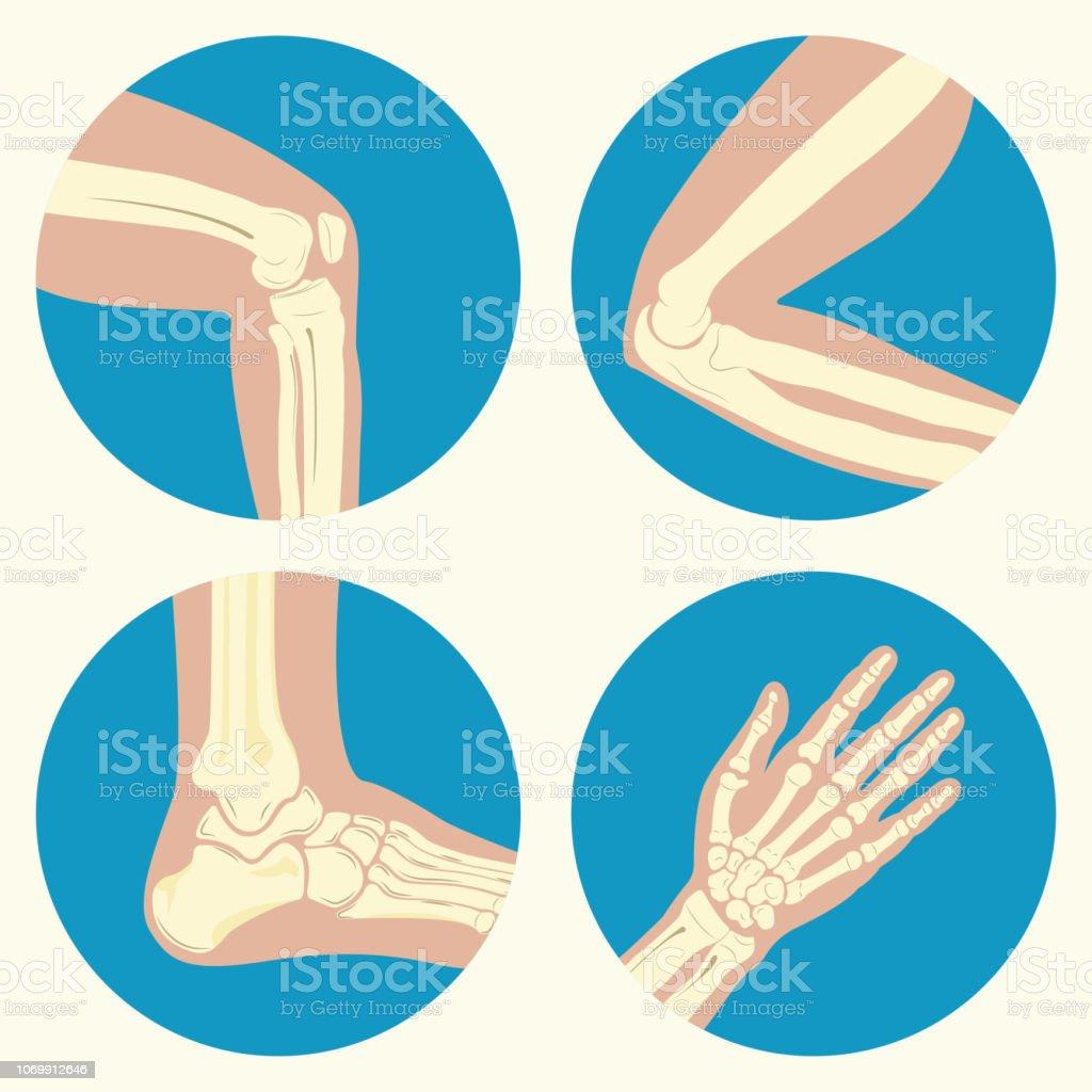 Set of human joints vector art illustration