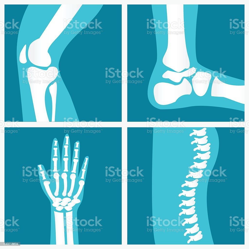 Set of human joints. vector art illustration