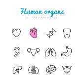 Set of human organs icons