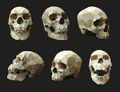 Set of Human Skulls.