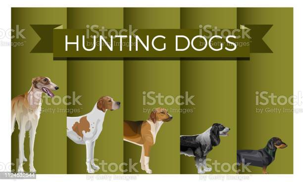 Set of hunting dog vector id1124532544?b=1&k=6&m=1124532544&s=612x612&h=2xf2cy3abatguvkld3jkokrduc8m 1b74ka4mjoofom=
