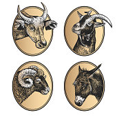 Portraits of animals in frame. Set of icons. Farm animals. Livestock cow, ram, goat, and donkey. Print black and gold foil on white background. Vector illustration, sketch. Hand drawing. Vintage style