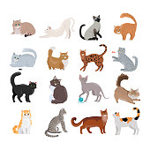 Set of icons with cats. Flat design vector. Variety breeds cats in different poses sitting, standing, stretching, playing, lying. For veterinary clinic, pet shop advertising. Collection of kittens
