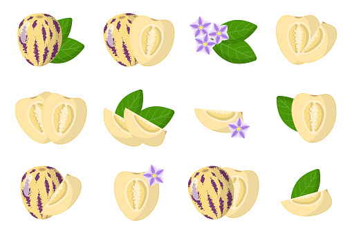 Set of illustrations with Pepino exotic fruits, flowers and leaves isolated on a white background.