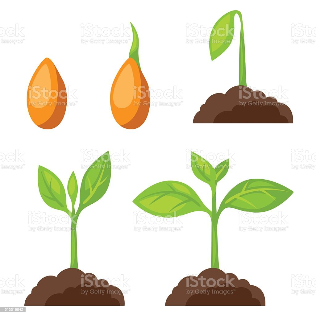 Set of illustrations with phases plant growth. Image for banners向量藝術插圖