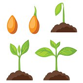 Set of illustrations with phases plant growth. Image for banners