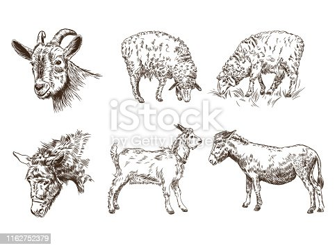 Set of images of farm animals. Sheep, goat, donkey. Livestock. Sketch graphics.