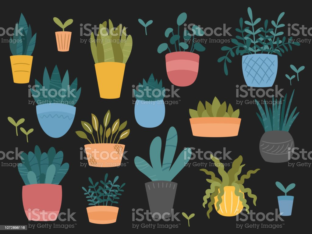 Set Of Indoor And Outdoor Decorative Garden Potted Plants
