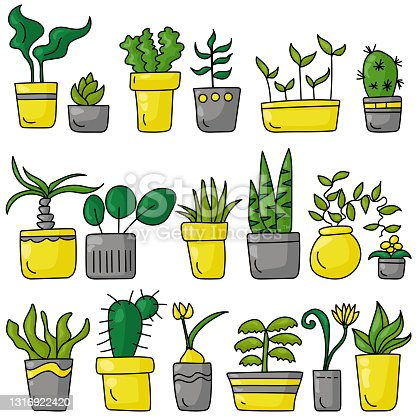 istock A set of indoor various plants in a doodle style, different types of blooming and not only indoor plants in bright gray and yellow pots 1316922420