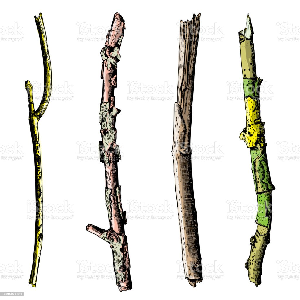 set of ink drawing and painted wood twigs isolated watercolor rh istockphoto com birch tree leaves vector birch tree vector art